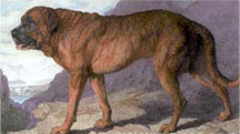 1815_Alpine_Mastiff.jpg
