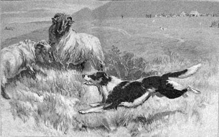1902SheepdogTrialsJohnCharlton.jpg
