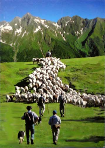 what is the difference between transhumance and nomadic pastoralism is What is the difference difference between transhumance and nomadic pastoralism in transhumance people grow food and in nomadic pastoralism any domesticated plant.